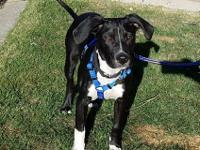 Jack is a 6 month old boy with lots of energy.  He