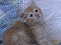 Jack's story 10 week old kitten. Adoption fee includes