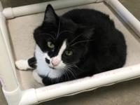 I am JACK, a black and white NEUTERED 3-year old male