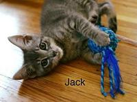 Jack's story Keller's Kats Rescue Inc. is a registered