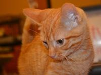 Jack's story Jack is a sweet and loving orange tabby
