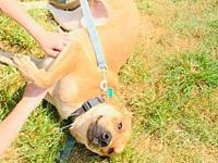 My story Jack Jack is a one year old mixed breed. We
