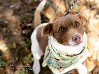 Jack's story Opt to Adopt! and give me a chance to love