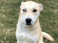 My name is Jack. I am a 2 year old lab/husky mix. I get