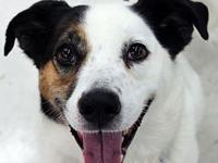 Jack's story To be considered for adopting a dog from