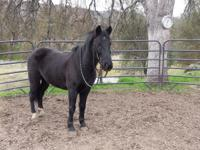 Jack is a teen mustang pony, he has a Nevada range