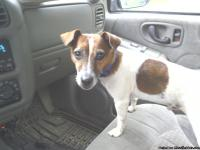 6 yr old jack russel hes fixed an a all around amazing