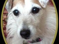 Jack Russell Terrier PEPA is an extremely loving little