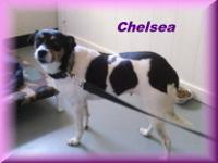 Jack Russell Terrier - Lily - Medium - Young - Female -