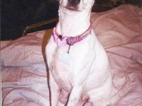 Jack Russell Terrier - Lucy - Small - Adult - Female -