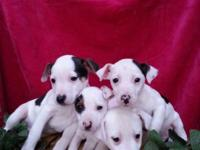 I have 4 lovable, lively male young puppies. They