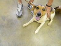 Jack Russell Terrier - Sammy - Small - Young - Male -