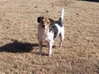 Jack Russell Terrier - Tiffy And Puppies - Small - Baby