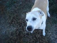 Jack Russell Terrier - Wishbone - Small - Senior - Male