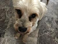 Jack's story Jack is a 20 lb, 5-6 year old schnauzer,
