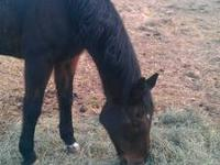 Jack is a 30 year old gelding who is very loving. He is