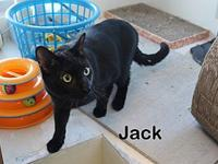 Jack's story This is friendly Jack. He is been with us