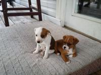 I jave 3 beautiful playfull and adorables jack russel