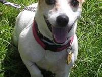 Jack Russell Terrier - Angel And Meeshak - Small -