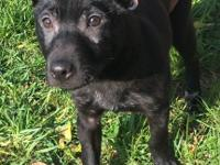 Jackaroo is a sweet and calm young puppy about 4 months