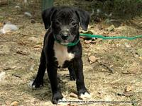 JACKIE's story ADOPTION INFORMATION IS LOCATED ON OUR