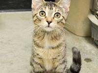 Jackie's story Primary Color: Brown Tabby Weight: 3.25