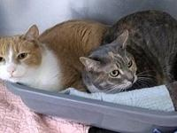 Jackie & Nemo's story Sweet, bonded pair whose owner