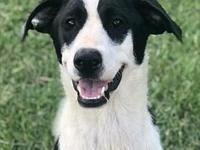 Jackson's story Jackson is fostered in Lecanto, FL