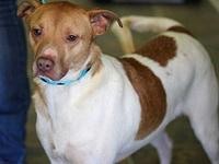 JACKSON's story MEET JACKSON! A 4-5 year old, male,