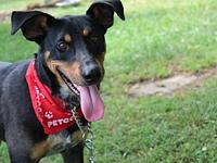 My story  2 yr old handsome mixed breed dog. Very