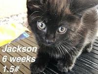 Jackson's story Our pets are spayed/neutered and