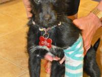 Jacob is a very handsome 3-4 month old Terrier mix. He