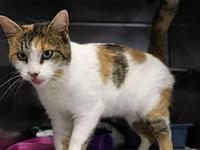 Jacqui's story Jacqui is a lively and engaging calico