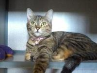 Jada's story New arrival- meet Jada! This gorgeous 9