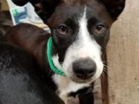 Jade is a 7-8-month-old Border Collie/Hound/Terrier