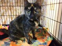 Jade's story All cats will be spayed or neutered before