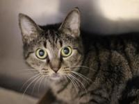 Jade is a pretty 2-year-old female who appears to be an
