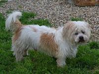 Jade's story Jade is a male, 4 year old Shih Tzu mix