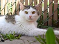 Jadine is a petite and pretty kitty who loves to play.