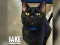 Jake's story Looking to add lots of fun and excitement