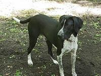 Jake's story Jake is a beautiful german shorthair mix