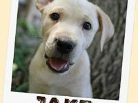 "JAKE's story My name is Jake, also known as ""Chomper""."