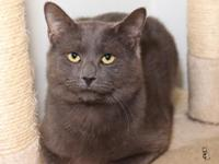 Im a Russian Blue and a very handsome cat. It took me