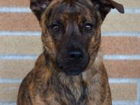 Handsome and sweet Jake is a great companion for