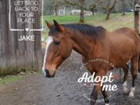 Jake is big, handsome, friendly guy! He came to us from