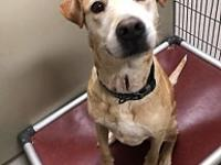 My story Jake is a 5-7 yr old lab mix. Such a gentle