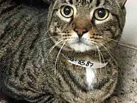 Jake's story Jake is a nice male Domestic Shorthair who