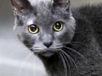 Jake's story 14 years old Domestic Shorthair-Grey