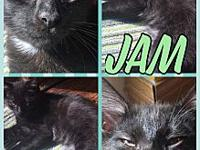 Jam's story Meet little Jam! This handsome little guy