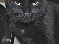 James's story James is a black domestic short hair who